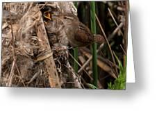 Marshy Nest Greeting Card