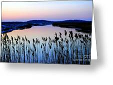 Marshy Twilight Greeting Card