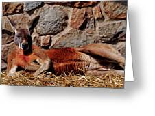Marsupial Centerfold Greeting Card by Lori Tambakis