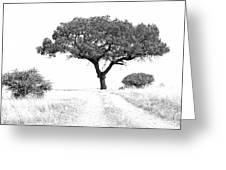 Marula Tree Greeting Card