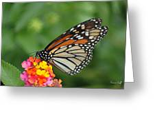 Marvelous Monarch  Greeting Card