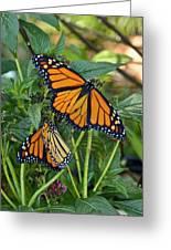 Marvelous Monarchs Greeting Card