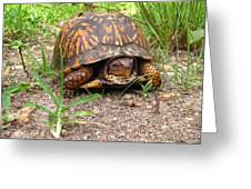 Maryland Box Turtle Greeting Card