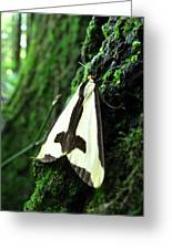 Maryland Clymene Moth Greeting Card