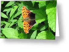 Maryland Eastern Comma Greeting Card