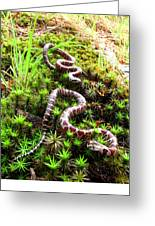 Maryland Milk Snakes Verticle Greeting Card