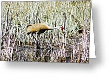 Marys Heron 2 Greeting Card