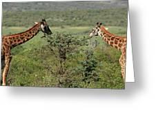 Masai Mara Giraffe Greeting Card