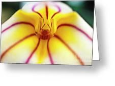 Masdevallia Orchid Greeting Card