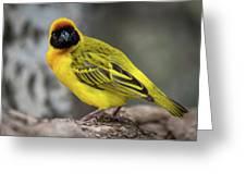 Masked Weaver Bird Facing Camera On Log Greeting Card