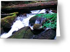 Mason Creek  Greeting Card