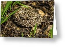 Massasauga Rattlesnake Greeting Card