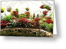 Massed Bromeliad In Hothouse Greeting Card