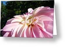 Master Gardener Pink Dahlia Flower Garden Art Prints Canvas Baslee Troutman Greeting Card