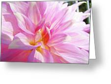 Master Gardeners Pink Dahlias Art Prints Baslee Troutman Greeting Card