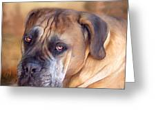 Mastiff Portrait Greeting Card by Carol Cavalaris