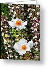 Matilija Poppies Greeting Card