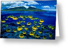 Maui Butterflyfish Greeting Card by Dave Fleetham - Printscapes