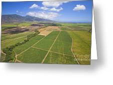 Maui Farmland Greeting Card