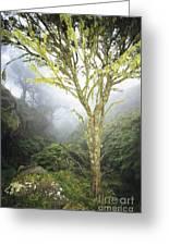 Maui Moss Tree Greeting Card