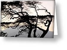Maui Windy Tree Greeting Card