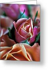 Mauve And Peach Roses Greeting Card by Kathy Yates