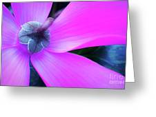 Mauve Cyclamen Greeting Card