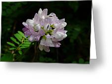 Mauve Flower Greeting Card