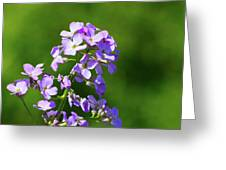 Mauve Flowers  Greeting Card