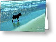 Maxwell On The Beach Greeting Card