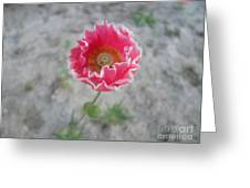May   Flower  Greeting Card