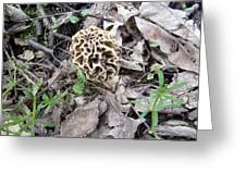 May Morel Mushroom Greeting Card
