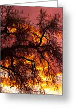 May One Sunset Greeting Card