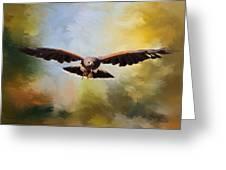 Maybe - Hawk Art Greeting Card