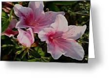 Maymont Flowers Greeting Card