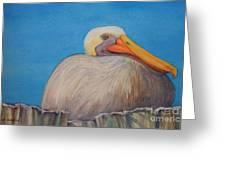 Mayport Florida Pelican Greeting Card