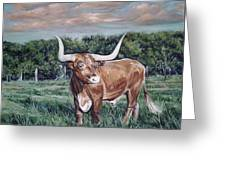 Mays Longhorn Greeting Card