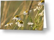Mayweed Greeting Card