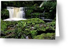 Mclean Falls In Southland New Zealand Greeting Card
