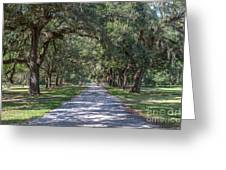 Mcleod Allee Greeting Card