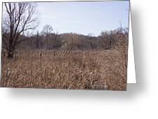 Meadow At Arnold Arboretum Greeting Card