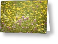 Meadow Dreams... Greeting Card