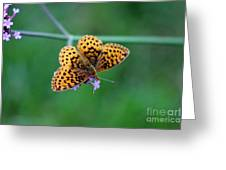 Meadow Fritillary Butterfly 2015 Greeting Card