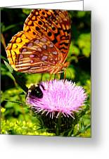 Meadow Fritillary On Thistle Blossom Greeting Card
