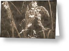 Meadow Grass In Sepia Greeting Card