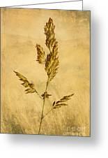 Meadow Grass Greeting Card