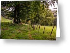 Meadow Grass Path Greeting Card