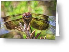 Meadow Hawk Dragonfly 2 Greeting Card