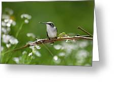 Meadow Hummingbird Greeting Card
