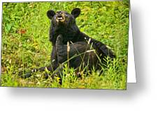 Meadow Itch Bear Greeting Card